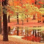 Autumn Trees (pic Robert frost)