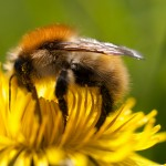 Flickr-bee-wwarby