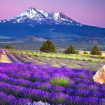 mountain-lavender-field